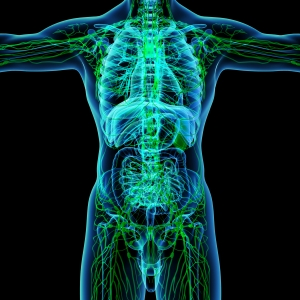 Nyirokmasszázs az egészséges nyirokrendszerért.
